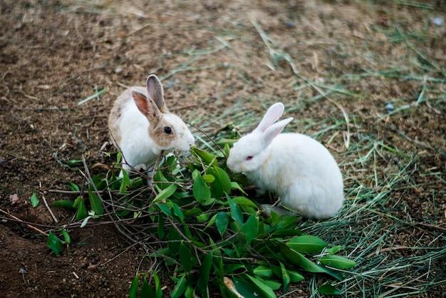 Instinct animalier survivre dans la nature