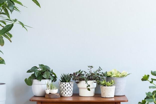 Intérieur de la chambre scandinave avec espace copie sur l'étagère en bambou marron avec de belles plantes dans différents pots design et hipster