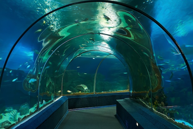 Intérieur du tunnel sous-marin de requin dans l'aquarium