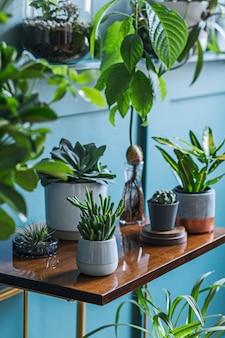 L'intérieur élégant du salon rempli de belles plantes, des cactus dans différents pots design sur l'étagère rétro marron. composition de la jungle du jardin domestique. décoration d'intérieur moderne. notion florale. modèle.