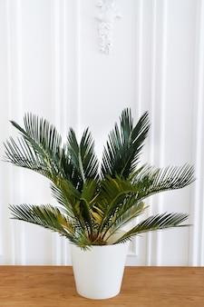 Intérieur propre et moderne de style scandinave avec un pot de fleurs et une plante d'intérieur.
