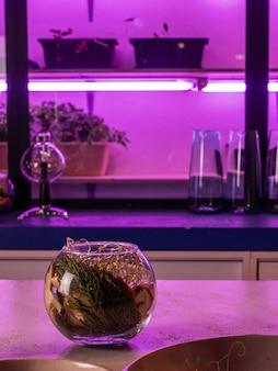 Intérieur rose néon violet de petit bar comptoir de restaurant