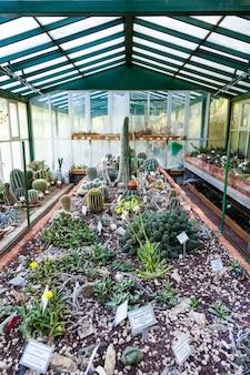 Intérieur d'une serre de cactus ; détail du banc de plantation
