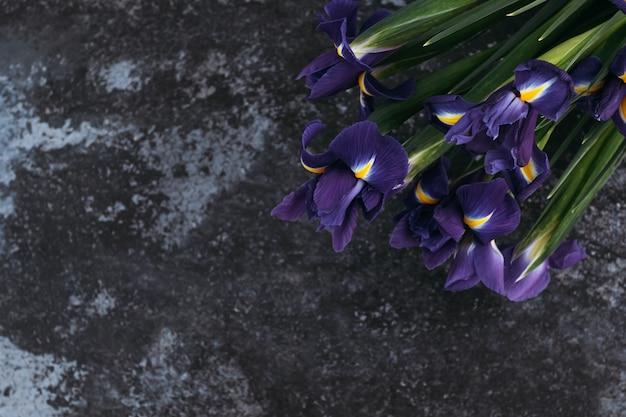 Iris bleus sur fond sombre, place pour le texte.