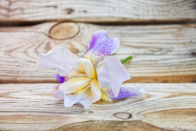 Iris sur fond de vieilles planches