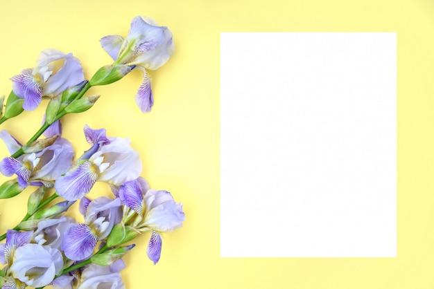 Iris violets sur fond jaune