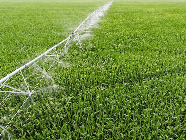 Irrigation d'un champ de maïs à partir d'installations d'irrigation