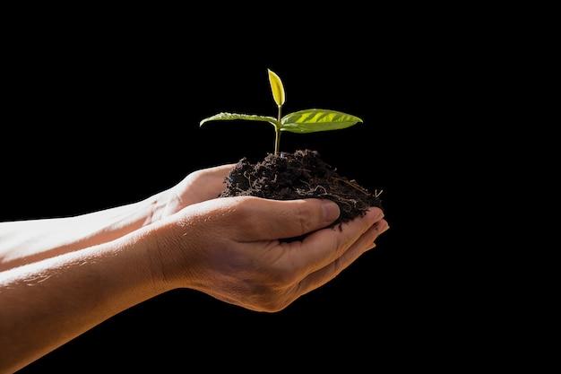 Isolat de fermiers main tenue semis sur fond noir