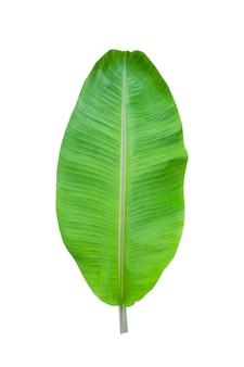 Isolat de feuille de bananier sur blanc
