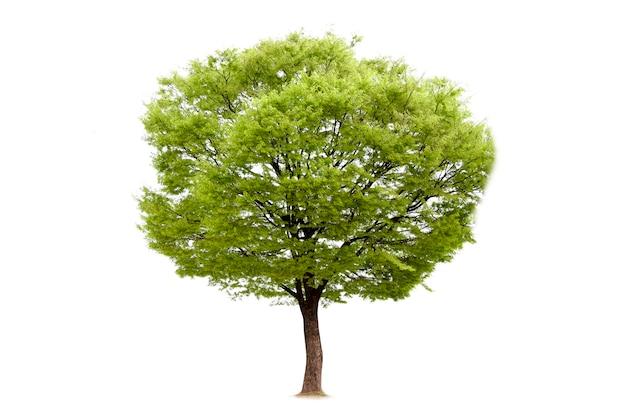 Isolé de l'arbre pour la décoration de l'écologie