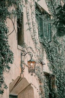 Ivy sur le mur de la maison. feuilles d'automne lierre sur les fenêtres vintage.