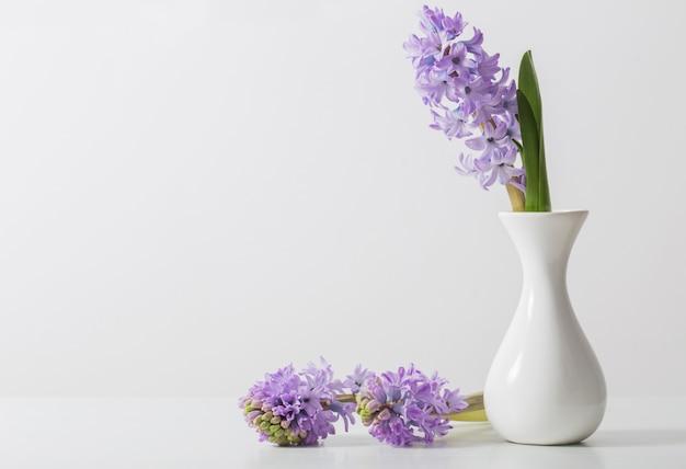 Jacinthe dans un vase sur fond blanc