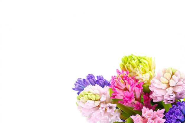 Jacinthes multicolores en bouquet sur un mur blanc