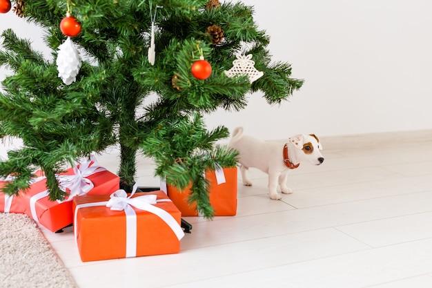 Jack russel chien sous un arbre de noël avec des cadeaux pour célébrer noël