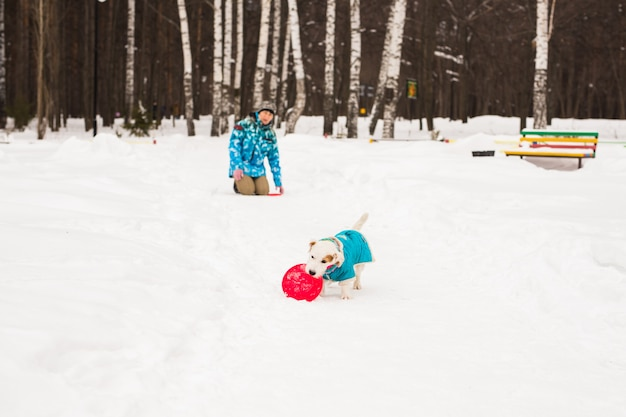 Jack russell terrier. chien jouant à winter park.