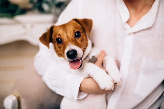 Jack russell terrier chiot jouant
