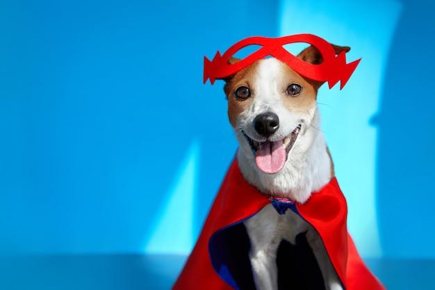 Jack russell terrier gai mignon dans le masque rouge