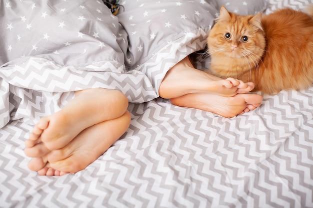 Jambes d'amoureux sous couverture. couple heureux s'amuser au lit