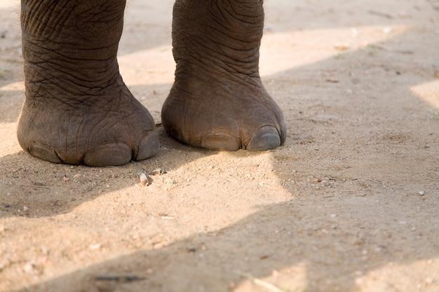 Jambes de bébé éléphant sur route