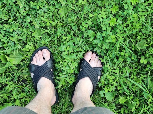 Les jambes en sandales se tiennent sur l'herbe verte d'un pré non tondu avec du trèfle