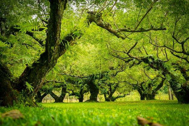 Jardin d'abricot japonais. flou artistique.