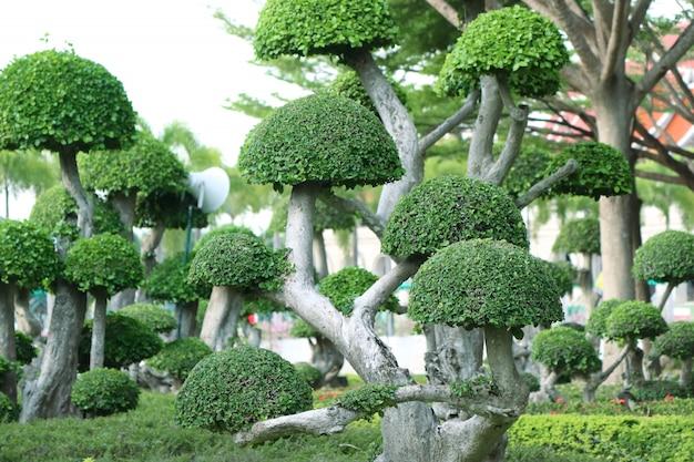 Jardin d'angleterre sous les tropiques
