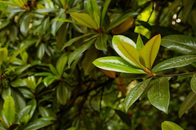 Jardin botanique de batumi, géorgie