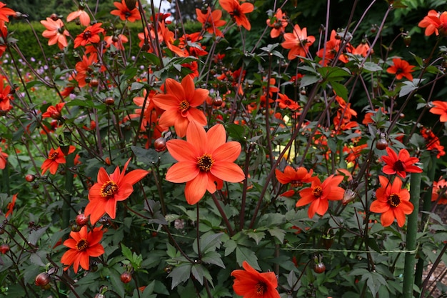 Jardin botanique à christchurch, nouvelle zélande