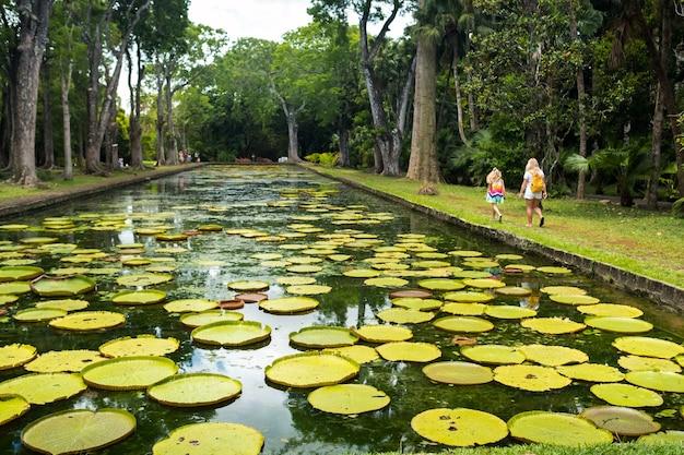 Jardin botanique sur l'île paradisiaque de maurice. bel étang avec des nénuphars. une île dans l'océan indien