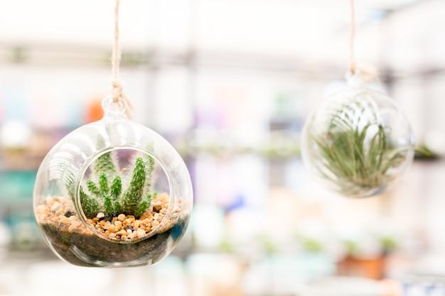Jardin de cactus en bouteille