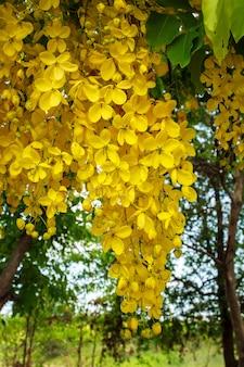 Jardin champ de fleurs colorées lumineuses naturelles en hiver.