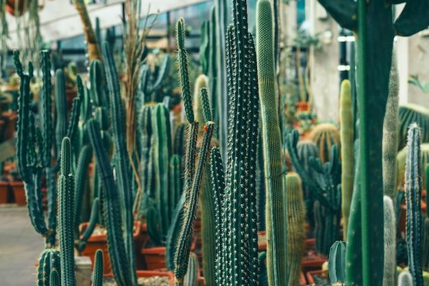 Jardin avec différents types de cactus