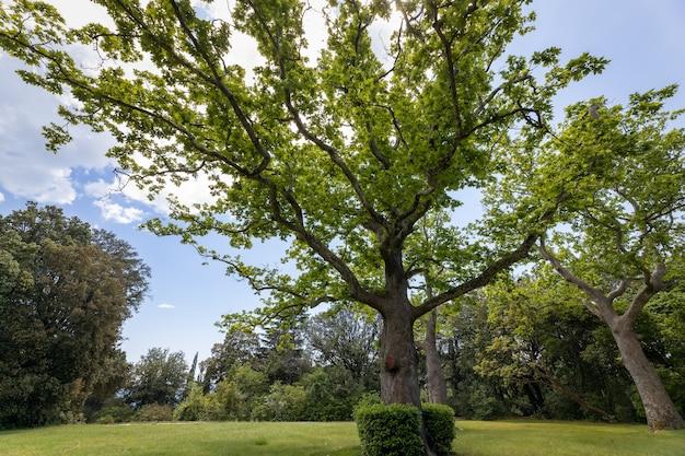 Le jardin du palais historique 1848 du comte vorontsov grand sycomore alupka crimée