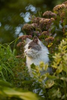 Jardin d'été ensoleillé et chat