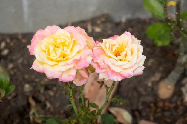 Jardin fleuri minimal à la maison, stock photo