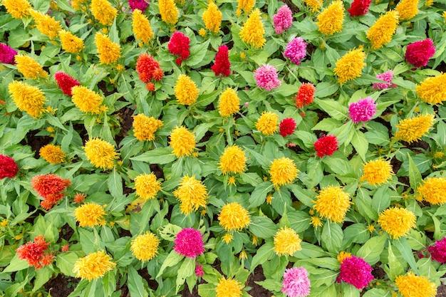 Jardin de fleurs colorées le matin.
