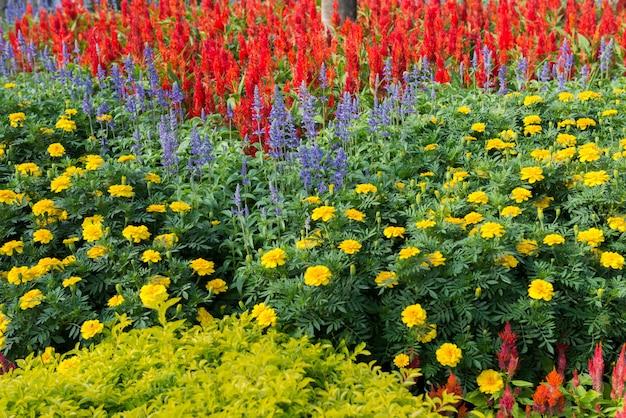 Jardin de fleurs colorées