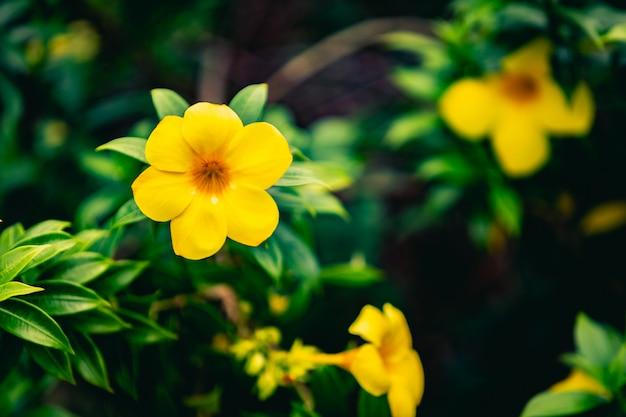 Jardin de fleurs jaunes et de feuilles vertes avec un arrière-plan flou.