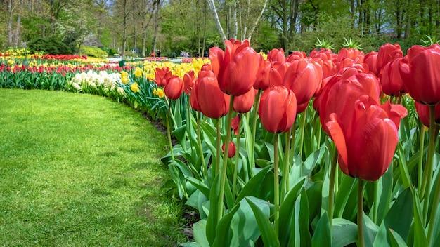 Jardin de fleurs de tulipes