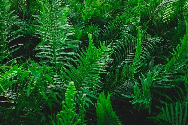 Jardin de fougère et fond d'arbre fougère