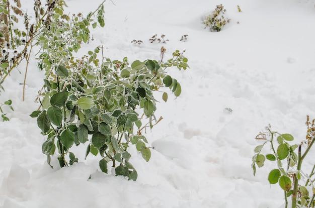Jardin d'hiver avec des plantes de fleurs