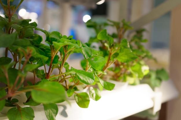 Jardin hydroponique de légumes récoltés jeunes et frais biologiques