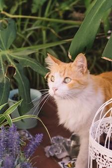 Jardin d'investigation de chat