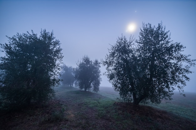 Jardin d'oliviers la nuit