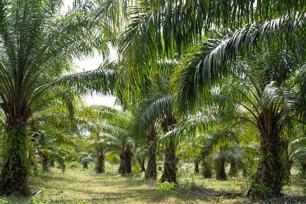 Jardin de palmiers verts