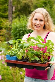 Jardin - planter des plants de fraises