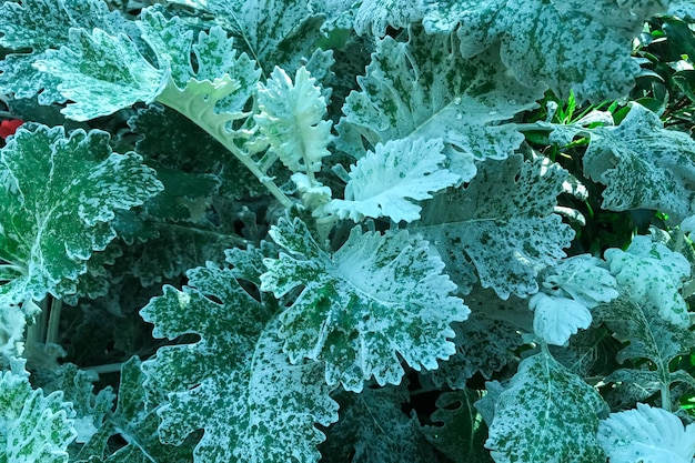 Jardin avec des plantes de chou vert qui poussent