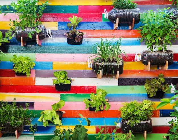 Jardin potager biologique.