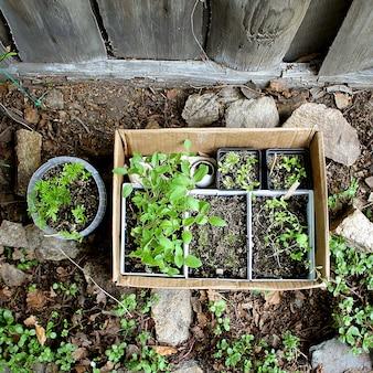Jardin de printemps de semis verts