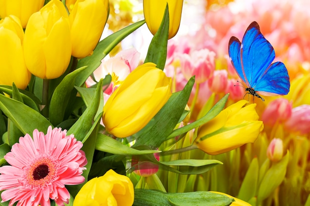 Jardin de tulipes avec un papillon bleu assis. carte postale de printemps avec des fleurs et des papillons de nuit. photo de haute qualité